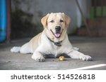 dog eating fruit  shallow focus | Shutterstock . vector #514526818