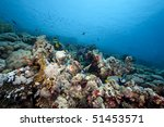 coral and fish in the red sea | Shutterstock . vector #51453571