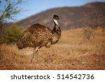 Emu In Australian Outback ...
