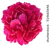 Stock photo bud of peony flower bright red or purple in artificial light isolated on white background 514665646