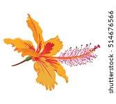 bright orange hibiscus flower... | Shutterstock .eps vector #514676566