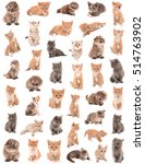 Stock photo a large collection of small kittens on a white background isolated 514763902