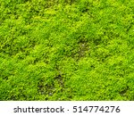 Green Moss On Old Concrete...