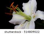 close up of white lilies. zen... | Shutterstock . vector #514809022