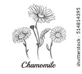 hand drawn chamomile flowers | Shutterstock .eps vector #514814395