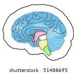 blue human brain. mesh   Shutterstock .eps vector #51488695