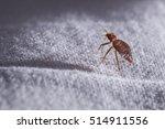 bed bug cimex lectularius  | Shutterstock . vector #514911556