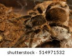 big spider tarantula in... | Shutterstock . vector #514971532