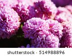 mums | Shutterstock . vector #514988896