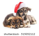 Dogs In Christmas Hat Isolated...