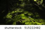 Small photo of Grey Veiled Amanita (Amanita porphyria) on a forest bed
