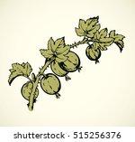 ripe raw fresh eco ribes uva... | Shutterstock .eps vector #515256376