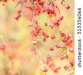 close up of bittersweet berries ... | Shutterstock . vector #515356066