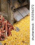 freshly processed corn kernels... | Shutterstock . vector #515356372