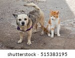 Stock photo friendly cat and dog on the street 515383195