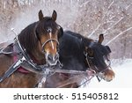 Clydesdale Horses Drawn Sleigh...