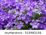 campanula flowers as a... | Shutterstock . vector #515482156