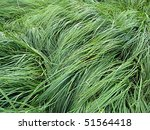 background of high green grass... | Shutterstock . vector #51564418