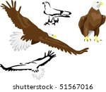 airspace,beak,bird,claw,eagle,feather,fly,raptor,soar,wing