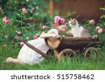 Stock photo a girl is playing with a cat 515758462