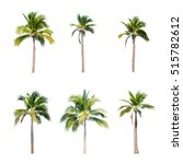 coconut trees on white... | Shutterstock . vector #515782612