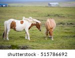 icelandic horses. the icelandic ... | Shutterstock . vector #515786692
