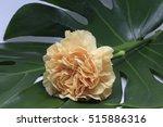 a yellow carnation | Shutterstock . vector #515886316