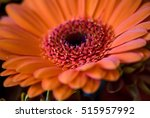 autumn harvest flower macro... | Shutterstock . vector #515957992