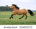 beautiful draft horse running... | Shutterstock . vector #516032272