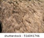 Rabbit Fur Texture