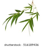 Fresh Bamboo Leaves Border Wit...