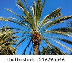 palm tree in southern california | Shutterstock . vector #516295546
