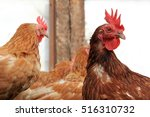 Small photo of Chickens on the farm. Chickens in free standing