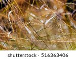 abstract plant in the field ... | Shutterstock . vector #516363406