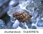 Frozen Pine Cone On The...