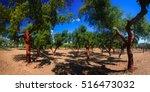 Panorama Cork Trees Natural...