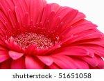 Red Gerbera - stock photo
