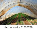 Plastic covered greenhouse on a strawberry plantation - stock photo