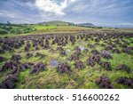 stacks of turf drying in an... | Shutterstock . vector #516600262