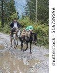 Small photo of Theth, Albania-21 September, 2016 : Typical transportation on donkey in Theth, Albania