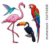 bright and colorful exotic... | Shutterstock .eps vector #516741838