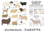 sheep breed infographic... | Shutterstock .eps vector #516834796
