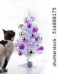 Stock photo cat in studio cat play cat play with christmas tree cat play christmas xmas cat play christmas 516888175