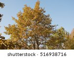 autumn tree photo. beautiful... | Shutterstock . vector #516938716