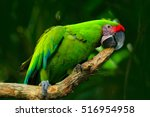 green parrot great green macaw  ... | Shutterstock . vector #516954958