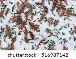 Leafs On The Snow. November...