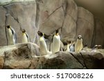 Hamburg Zoo  Hagenbeck   ...