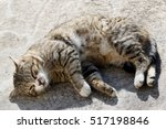 Small photo of Big fluffy homeless cat with long whiskers sleeping outdoor.