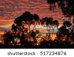 Sunrise On The Eucalyptus...