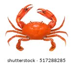 Crab isolated on white background. Fresh seafood. Serrated mud crab.
